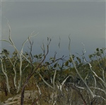 'Weathered Snowgums' - Mt Wellington Series (827)