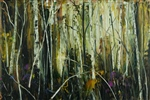 Native Forest - Lake Pedder National Park Series (1120)