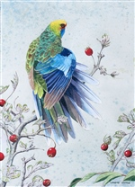 Green Rosella with Hawthorn Berries