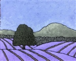 The Lavender Fields 3