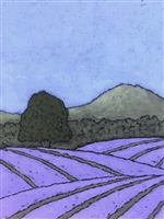 The Lavender Fields 4