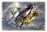 The Racers Burst into the Rain