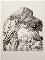 A Gathering - Tea Trees, Barnbougle