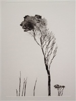 Standing Tall - Tea Trees, Barnbougle